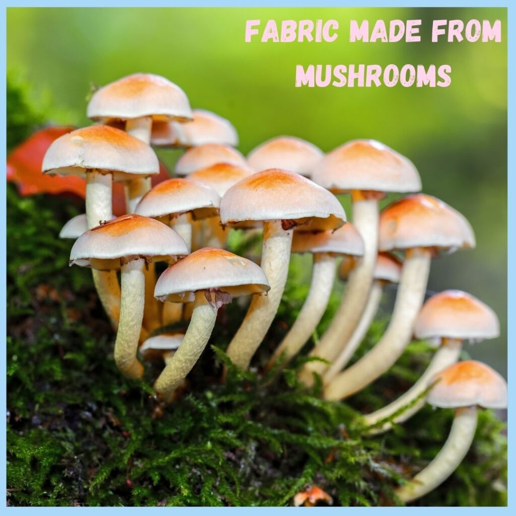 Mushrooms used for baby clothing production